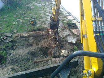 dessouchage d'arbre