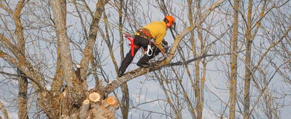 Elagage et tailles des arbres