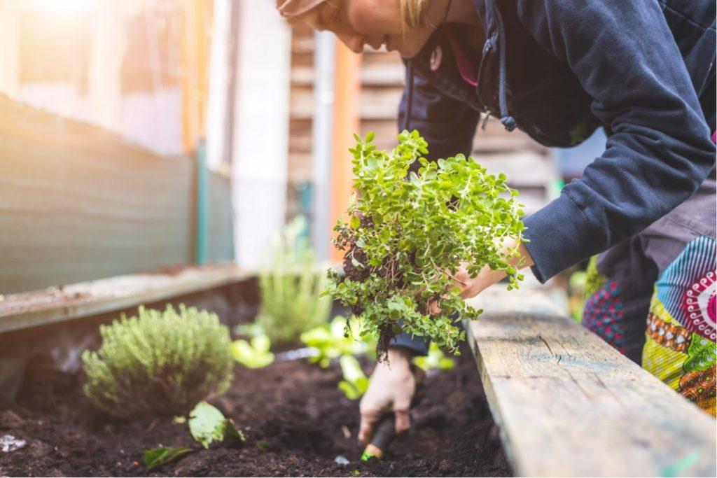 plantation de plantes a nantes