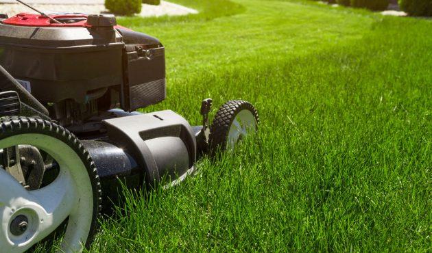 entretien de la pelouse